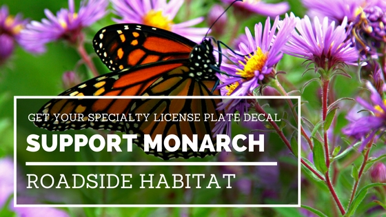 monarch_decal_graphic
