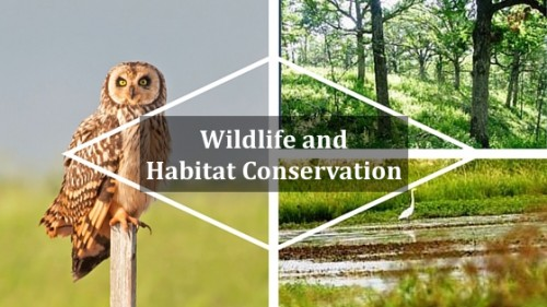 Wildlife & Habitat